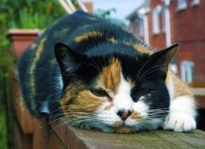 1159793_cat_on_a_fence